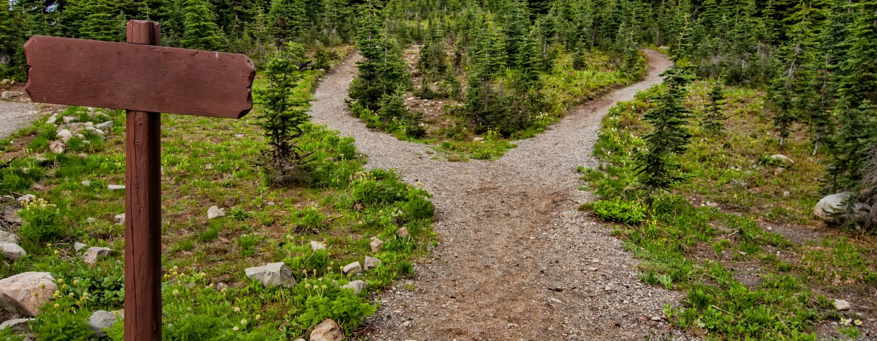 Two paths in a forest
